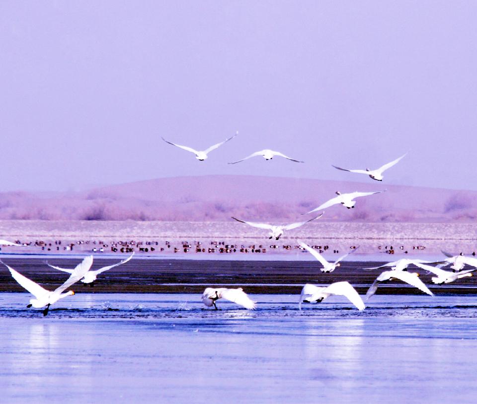 张掖国家湿地公园 AAAA