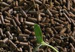 厂家直供 颗粒状茶粕 柱状茶粕颗粒